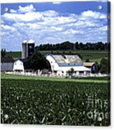 Amish Country - 38 Acrylic Print