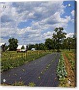 Amish Farm And Garden Acrylic Print
