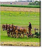 Amish Farmer Acrylic Print by Guy Whiteley