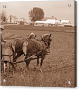 Amish Farmer Acrylic Print by Janet Pugh