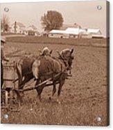 Amish Farmer Acrylic Print by Janet Pugh
