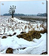 Amish Field In Winter Acrylic Print