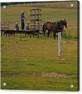 Amish Man And Two Sons On The Farm Acrylic Print