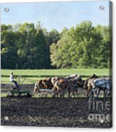 Amish Plowing Field Acrylic Print