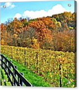 Amish Vinyard Two Acrylic Print by Frozen in Time Fine Art Photography