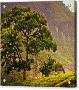 Among The Mountains And Tea Plantations. Nuwara Eliya. Sri Lanka Acrylic Print