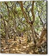 Among The Trees - The Mysterious Trees Of The Los Osos Oak Reserve Acrylic Print