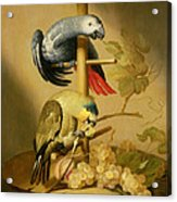 An African Grey And An Orange Winged Amazon Parrot On  A Perch With Grapes Acrylic Print