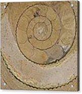 An Ancient Ammonite Pattern Vi Acrylic Print