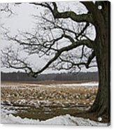 An Appleton Tree And Field In Winter Acrylic Print