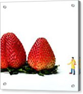 An Artist Drawing Strawberries Acrylic Print by Paul Ge