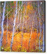 An Autumn Symphony Of Colour Acrylic Print