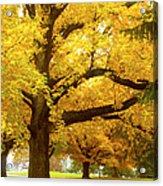 An Autumn Walk - 2 Acrylic Print