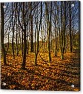 An Autumn Walk Acrylic Print