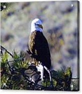 An Eagle In The Sun Acrylic Print