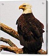 An Eagle's Perch Acrylic Print