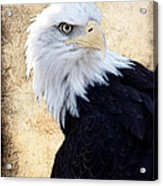 An Eagles Standpoint II Acrylic Print