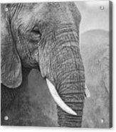 An Elephant Never Forgets Acrylic Print