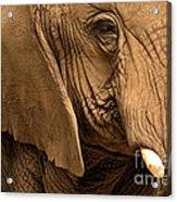 An Elephant's Eye Acrylic Print