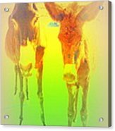 Donkey Mother And Son On An Extremely Hot Day  Acrylic Print