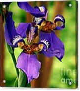 An Eyeful Iris Acrylic Print
