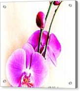An Orchid For You Acrylic Print by Doris Wood