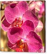 An Orchid Acrylic Print
