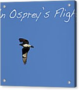 An Ospreys Flight Acrylic Print
