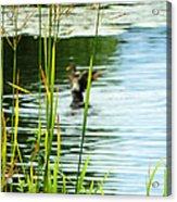 An Out Of Focus Flap  Acrylic Print