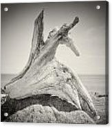 Analog Photography - Driftwood Acrylic Print
