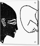 Anatomy: Human Cranium Acrylic Print
