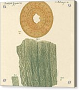 Anatomy Of A Straw Acrylic Print