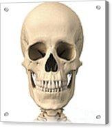 Anatomy Of Human Skull, Front View Acrylic Print