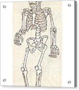 Anatomy Scrolls - Front Acrylic Print