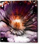 Ancient Flower 1 Acrylic Print
