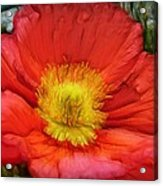 Ancient Flower 4 - Poppy Acrylic Print