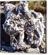 Ancient Gnarled Driftwood - Oregon Beach Acrylic Print