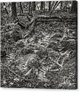 Ancient Grove Acrylic Print