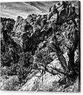 Ancient Witness Acrylic Print
