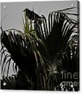 And A Crow Oh Oh In A Palm Tree Acrylic Print