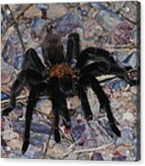 And Along Came A Little Spider .  Acrylic Print