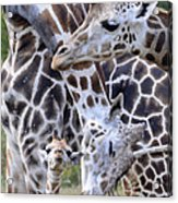 And Baby Makes Three Acrylic Print by Lori Tambakis
