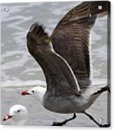 And Fly Acrylic Print