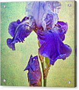 And One To Come Acrylic Print