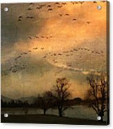 And They Flew Away Acrylic Print by Kathy Jennings