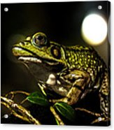 And This Frog Can Sing Acrylic Print by Bob Orsillo