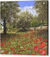Andalucian Poppies Acrylic Print