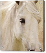 Andalusian Dreamer Acrylic Print
