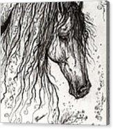 Andalusian Horse Drawing 2 Acrylic Print