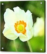 Anemone Acrylic Print by Cathie Tyler